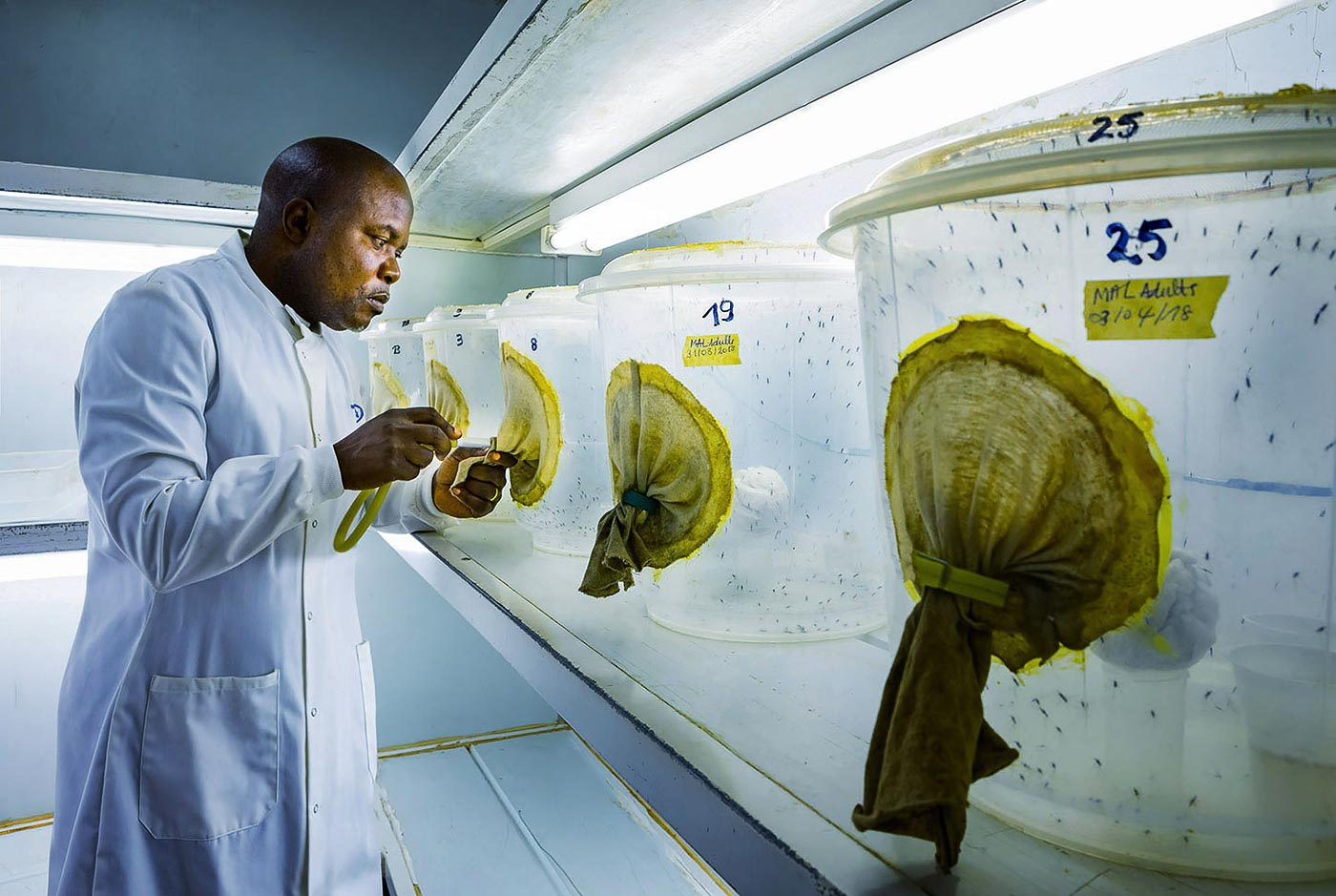 Research scientist with test subject mosquitoes at research facility - corporate photography collection